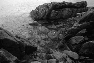 corse oct 2010 50 B&W pc.jpg
